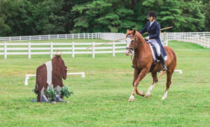The Horse Source, Working Equitation, An Emerging Sport